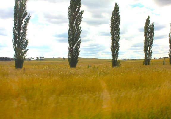 armidale countryside