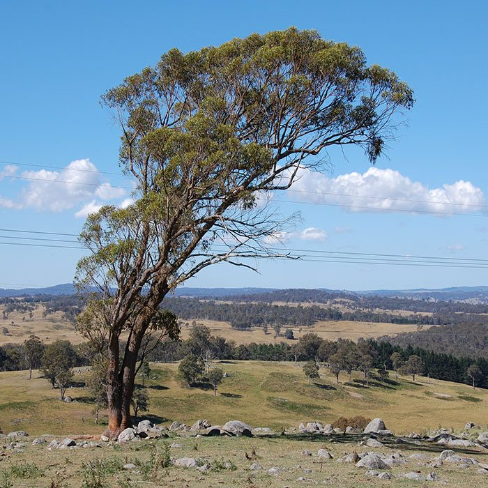 When in Armidale: Top 10 Activities to Do in Armidale -